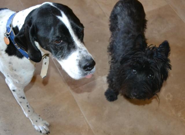 Coco-&-Tiggy